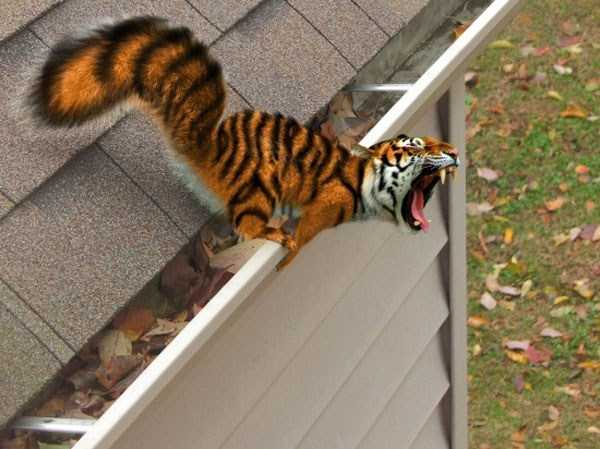 funny-photoshopped-pictures (13)