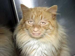 Oddly Funny Photoshopped Photos (39 photos) 20