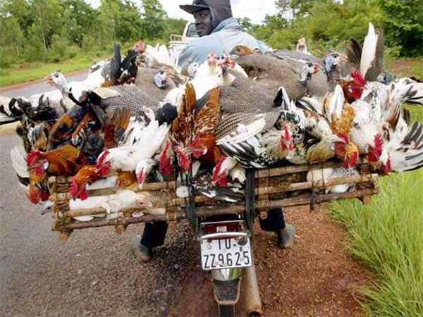 motorcycles-carrying-heavy-loads (11)