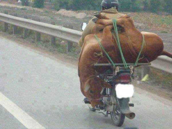 motorcycles-carrying-heavy-loads (14)