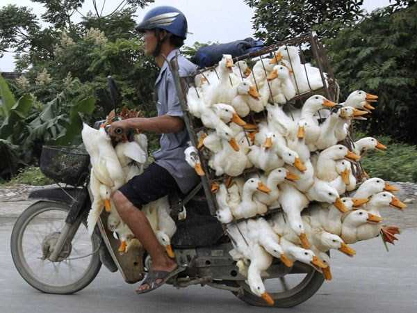 motorcycles-carrying-heavy-loads (26)