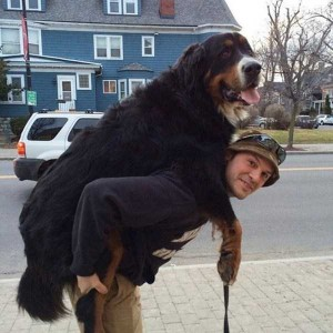 43 Dogs Who Are Clearly Not Regular-Sized (43 photos) 1