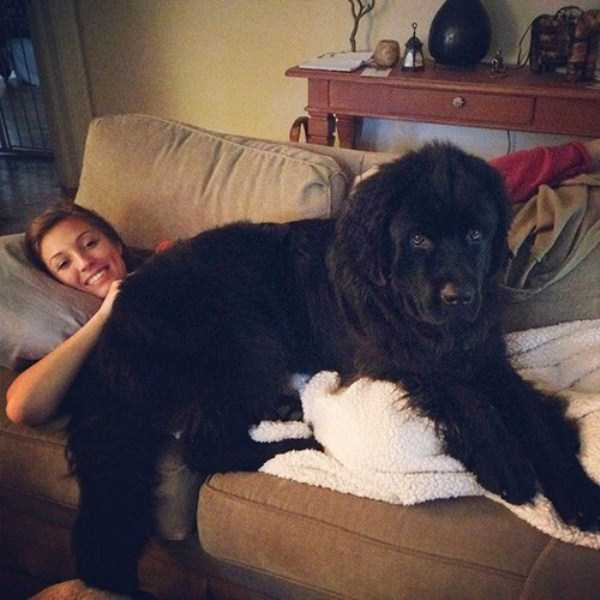 the-biggest-dogs (15)
