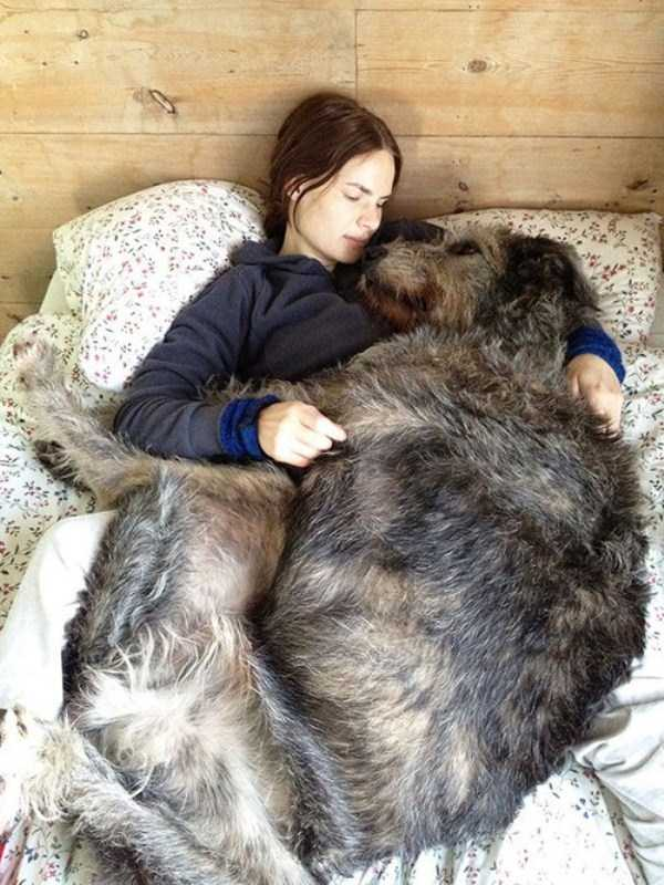 the-biggest-dogs (22)