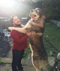 43 Dogs Who Are Clearly Not Regular-Sized (43 photos) 24