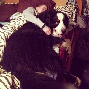 43 Dogs Who Are Clearly Not Regular-Sized (43 photos) 3
