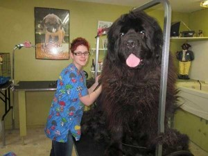 43 Dogs Who Are Clearly Not Regular-Sized (43 photos) 32