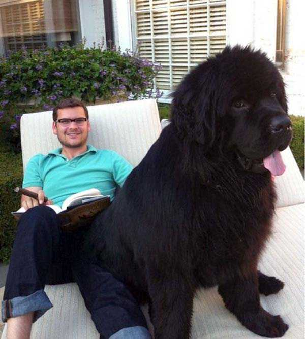 the-biggest-dogs (37)