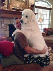 43 Dogs Who Are Clearly Not Regular-Sized (43 photos) 38