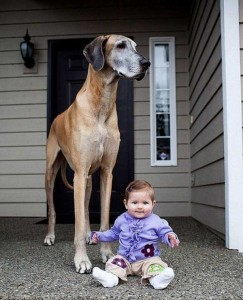 43 Dogs Who Are Clearly Not Regular-Sized (43 photos) 9