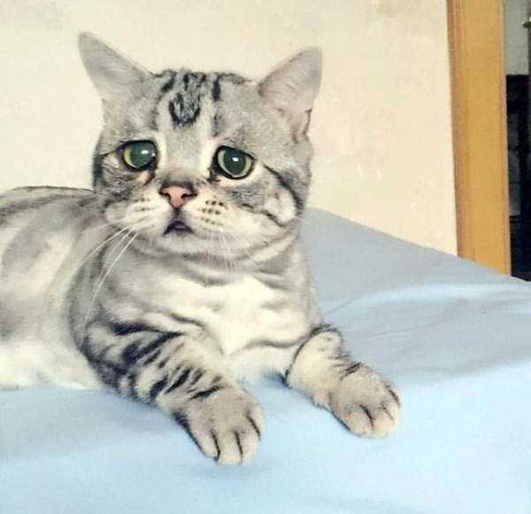 Luhu-sad-cat (1)