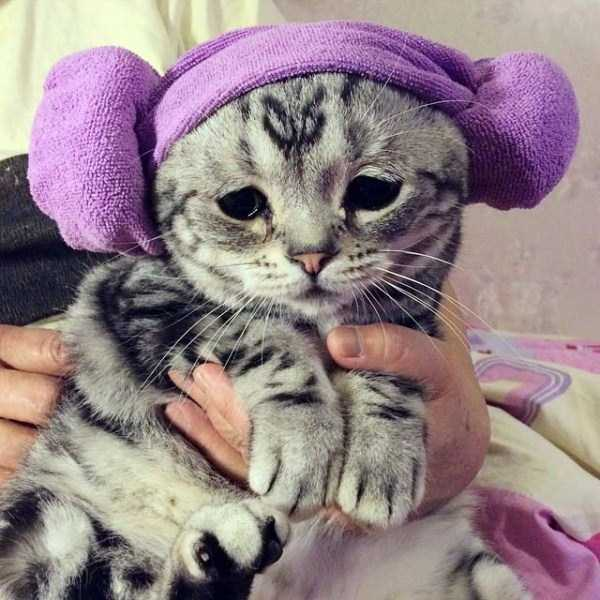 Luhu-sad-cat (10)