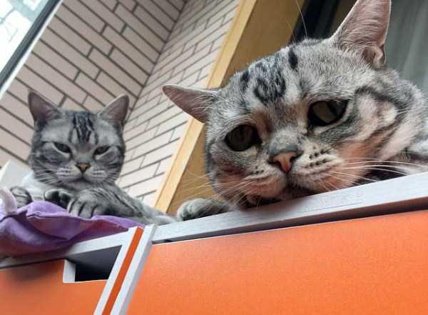 Luhu-sad-cat (12)