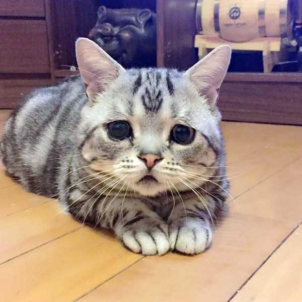 Luhu-sad-cat (14)