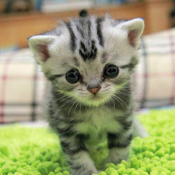 Luhu-sad-cat (15)