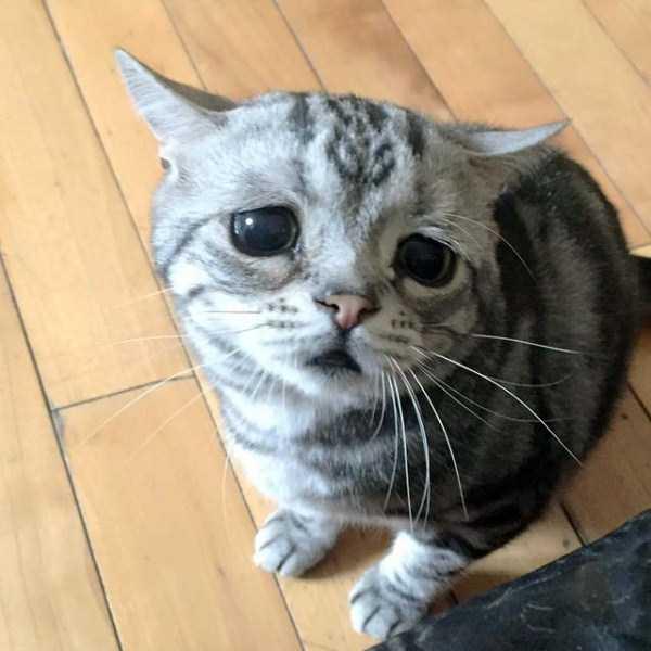 Luhu-sad-cat (2)