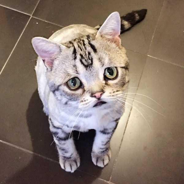 Luhu-sad-cat (3)