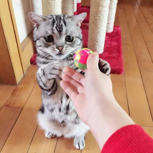 Luhu-sad-cat (4)