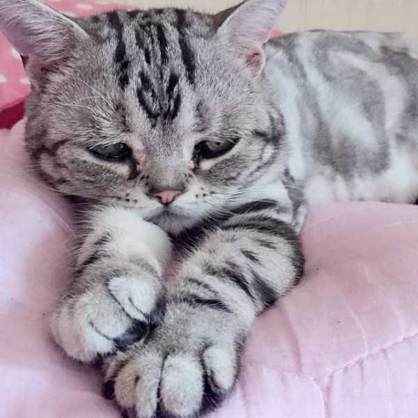 Luhu-sad-cat (5)