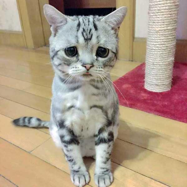 Luhu-sad-cat (6)