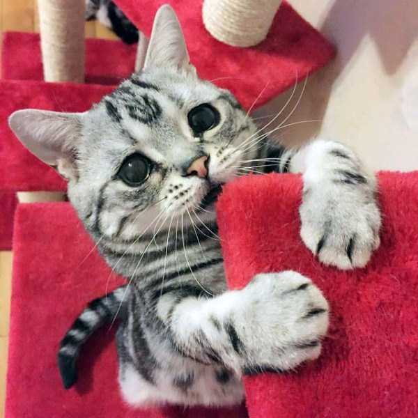 Luhu-sad-cat (8)
