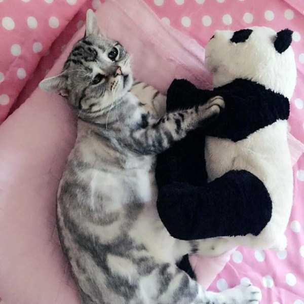 Luhu-sad-cat (9)