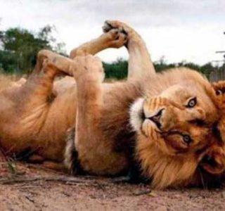 Animals Posing Like Models (55 photos)