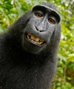 Animals Posing Like Models (55 photos) 19