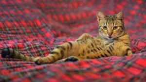 Animals Posing Like Models (55 photos) 26