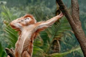 Animals Posing Like Models (55 photos) 3