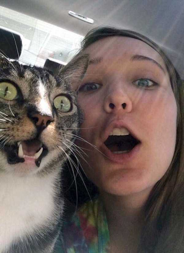 animals-who-dont-like-selfies (17)