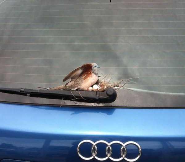 bird-nests-in-unusual-places (1)