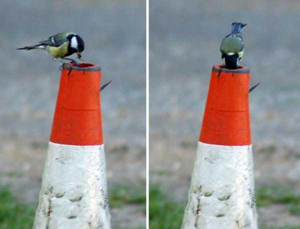 bird-nests-in-unusual-places (11)