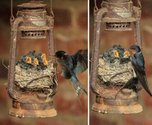 Amazing Birds' Nests Built In The Most Unusual Places (35 photos) 13