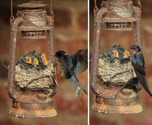 bird-nests-in-unusual-places (13)