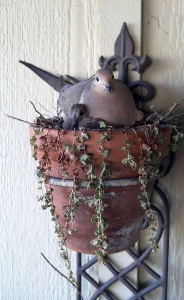 bird-nests-in-unusual-places (16)
