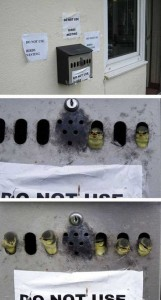 Amazing Birds' Nests Built In The Most Unusual Places (35 photos) 17