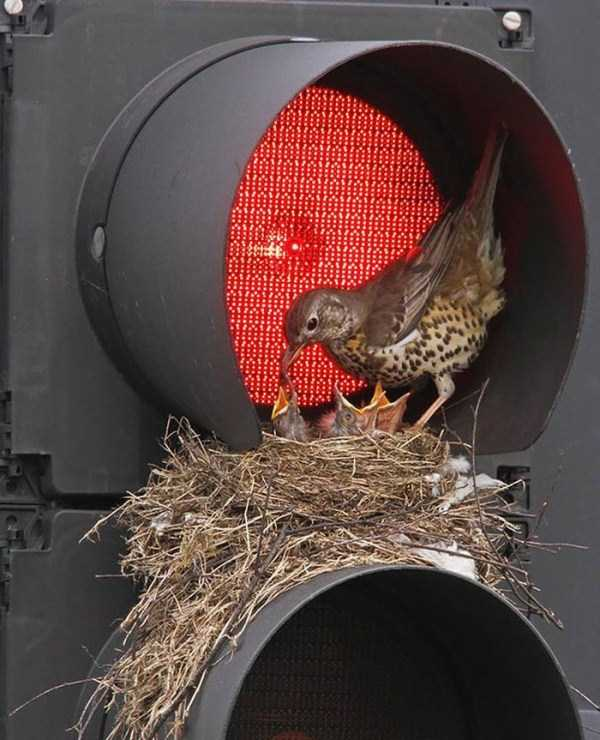 bird-nests-in-unusual-places (18)