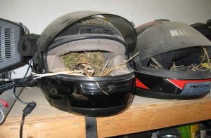 Amazing Birds' Nests Built In The Most Unusual Places (35 photos) 19