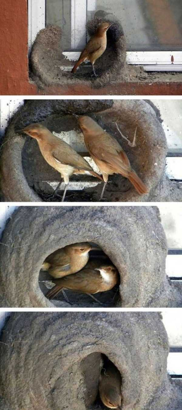 Amazing Birds Nests Built The Most Unusual Places