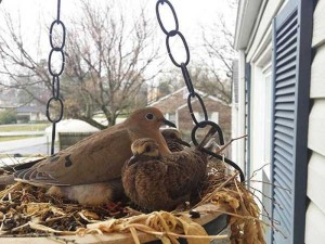 Amazing Birds' Nests Built In The Most Unusual Places (35 photos) 22