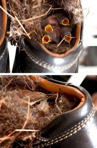 Amazing Birds' Nests Built In The Most Unusual Places (35 photos) 25
