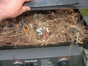 Amazing Birds' Nests Built In The Most Unusual Places (35 photos) 26