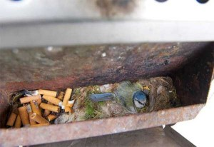 Amazing Birds' Nests Built In The Most Unusual Places (35 photos) 3