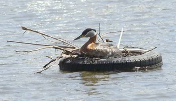 bird-nests-in-unusual-places-(32)