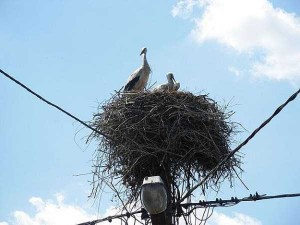 Amazing Birds' Nests Built In The Most Unusual Places (35 photos) 33