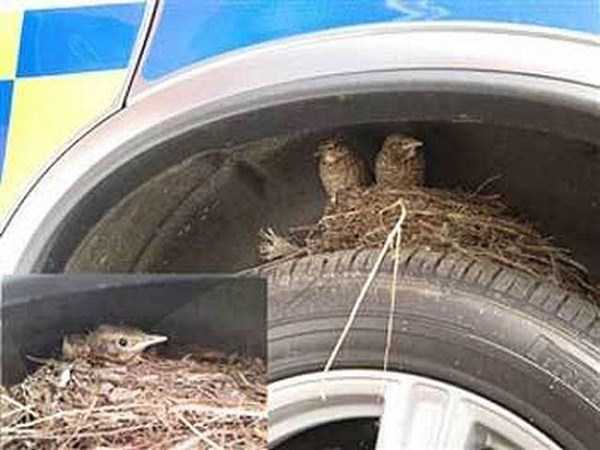 bird-nests-in-unusual-places (35)