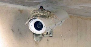 Amazing Birds' Nests Built In The Most Unusual Places (35 photos) 35