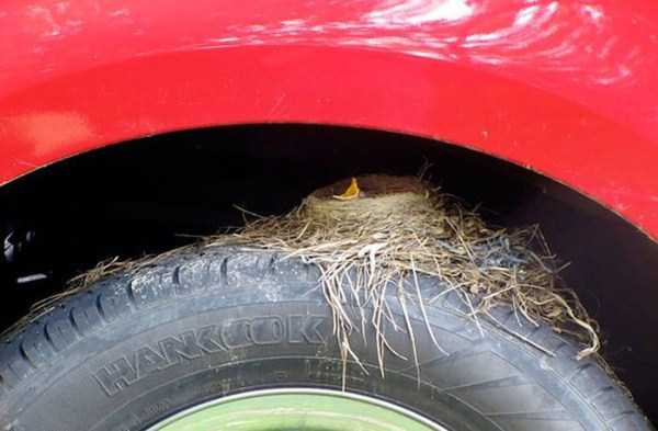 bird-nests-in-unusual-places (4)