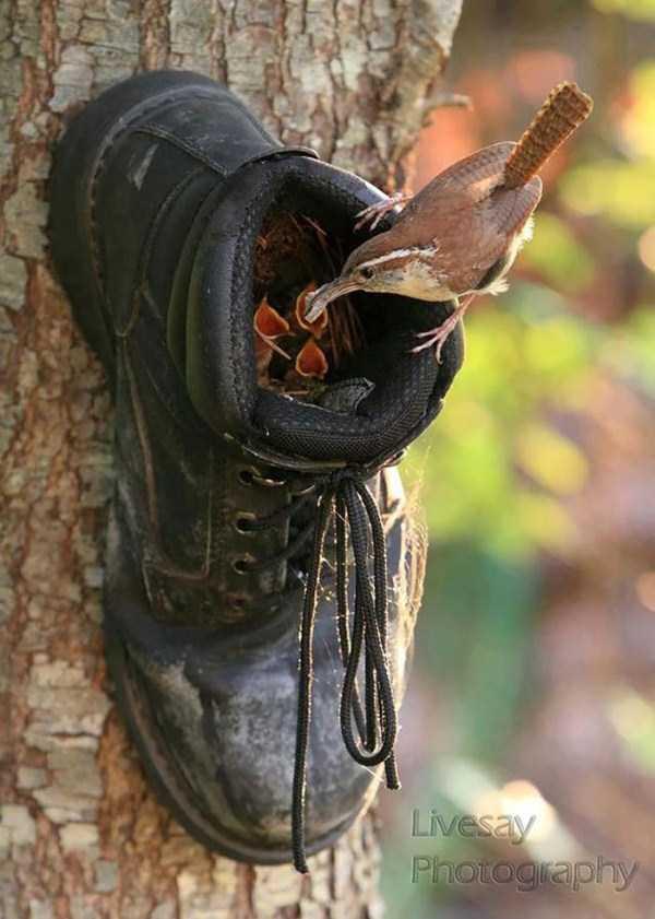 bird-nests-in-unusual-places (6)